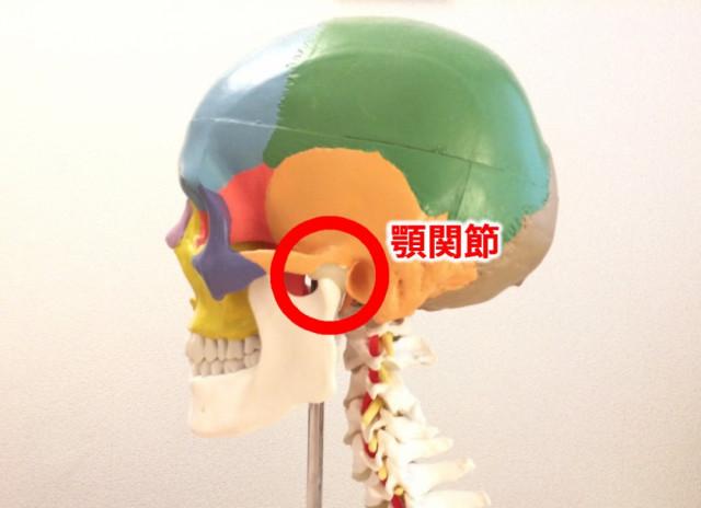 顎関節と頸椎